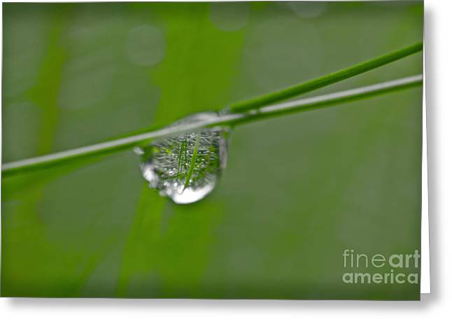 Rain Drop Greeting Cards - The World in One Little Drop Greeting Card by Heiko Koehrer-Wagner