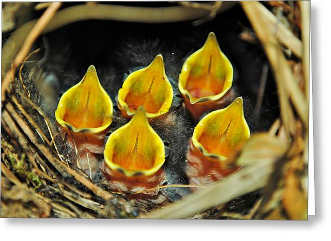 The Wren Quintet Greeting Card by Kelly Nowak