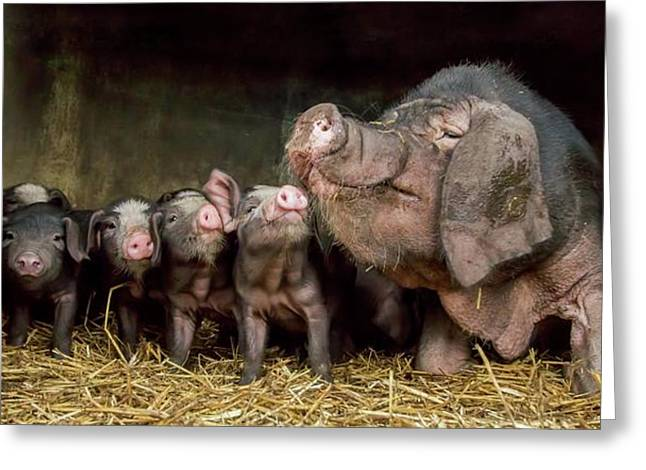 The Wrinkled Ones Greeting Card by Gert Van Den