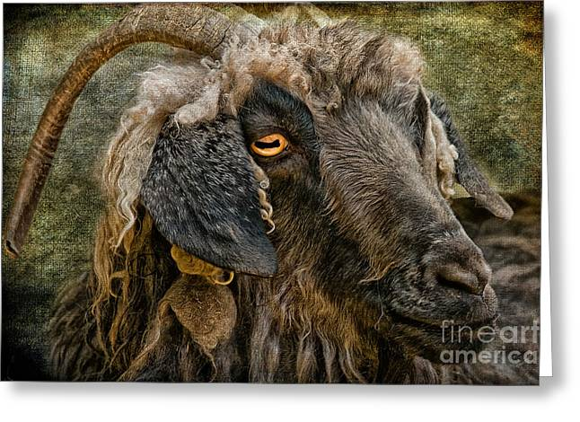 Goat Digital Greeting Cards - The Year Of The Goat Greeting Card by Lois Bryan