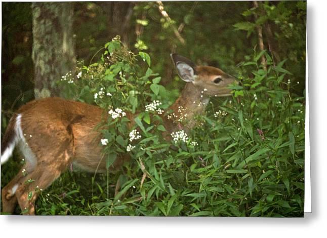 West Virginia Greeting Cards - The Yearling 1 Greeting Card by Howard Tenke