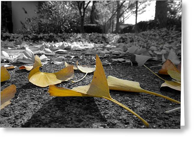 Yellow Leaves Pyrography Greeting Cards - The Yellow Leaves Greeting Card by Fabien White