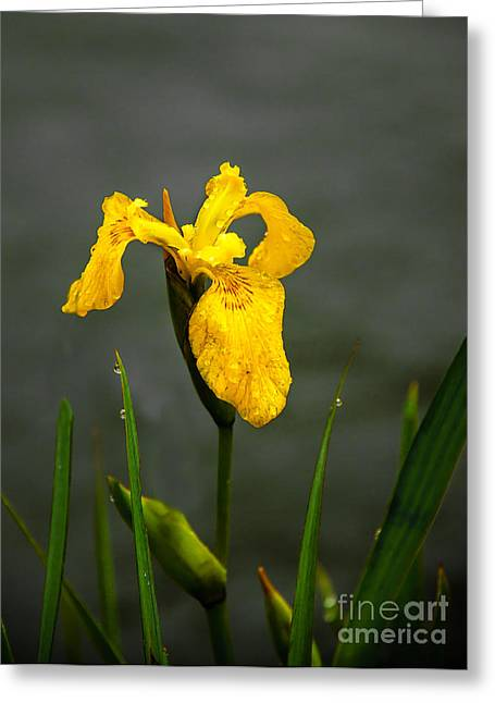 Haybale Greeting Cards - The Yellow One Greeting Card by Robert Bales