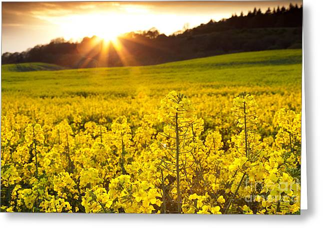 The Yellow Rapeseed Field Beautiful Greeting Card by Boon Mee