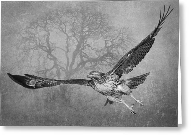 Hawks In Flight Greeting Cards - The Young and the Old 2 Greeting Card by Angie Vogel