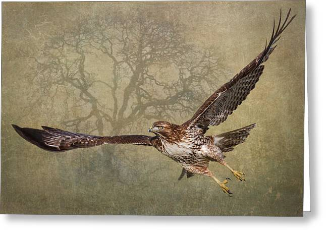 Hawk In Flight Greeting Cards - The Young and the Old Greeting Card by Angie Vogel