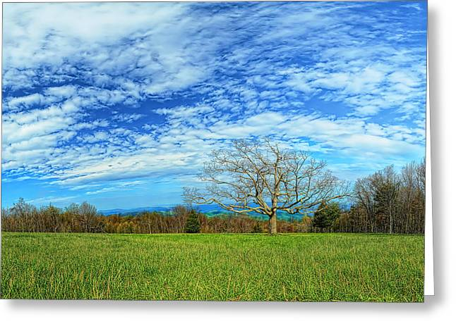Leafs Greeting Cards - The Zen Meadow Greeting Card by Metro DC Photography