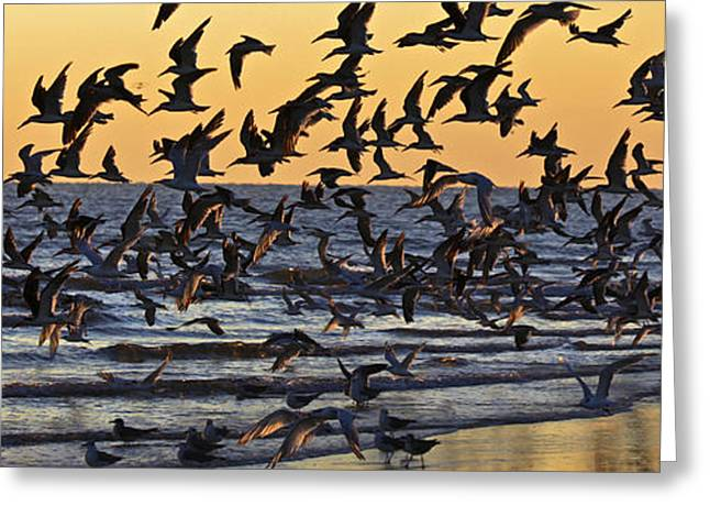 Tern Greeting Cards - Their Day at the Beach Greeting Card by Richard Powers