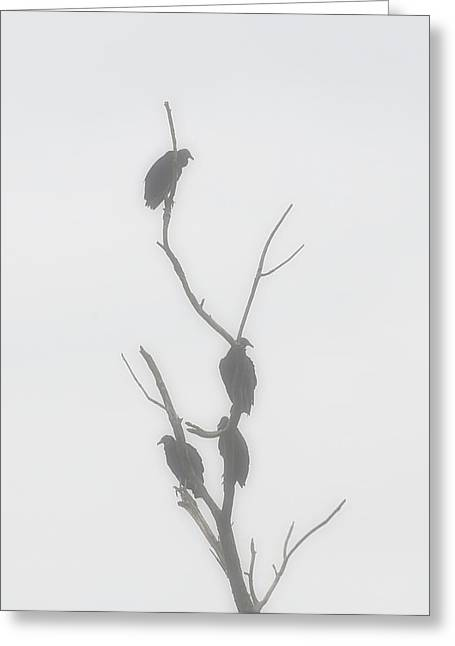 Their Waiting Four Black Vultures In Dead Tree Greeting Card by Chris Flees