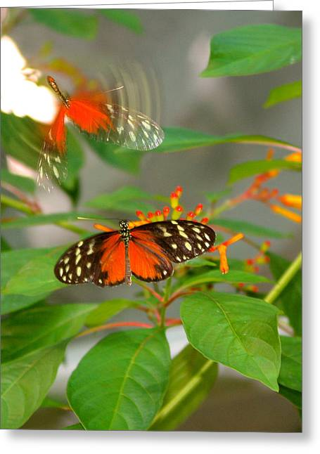 Butterflies Pyrography Greeting Cards - Then There Was One Greeting Card by DUG Harpster