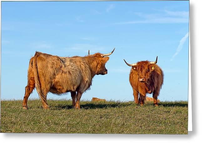 Mood Greeting Cards - There Can Be Only One Highland Cow Greeting Card by EXparte SE