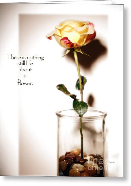 Glass Pebble Greeting Cards - There is nothing still life about a flower  Greeting Card by Steven  Digman