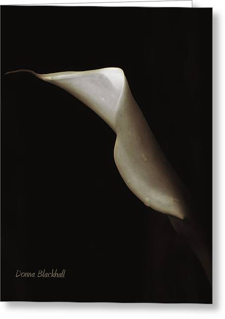 Calla Lily Greeting Cards - There Is Still Life Greeting Card by Donna Blackhall