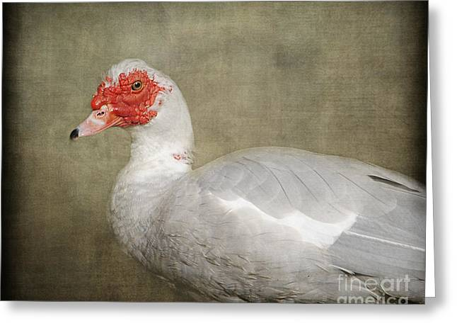Muscovy Greeting Cards - They Call Me A Redhead - Muscovy Duck Greeting Card by Jai Johnson