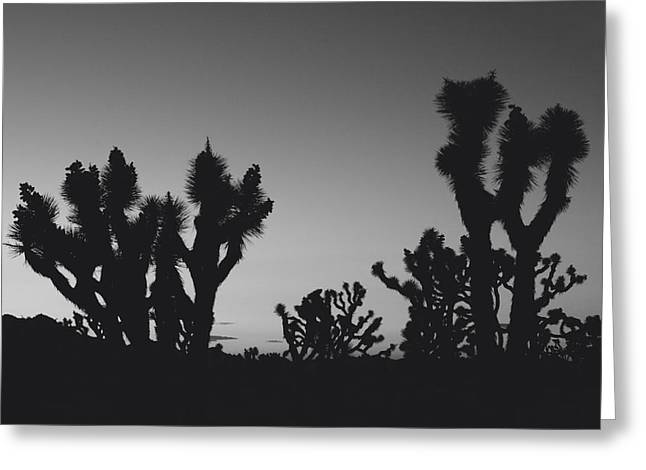 Joshua Tree National Park Greeting Cards - They Come Out at Night Greeting Card by Laurie Search