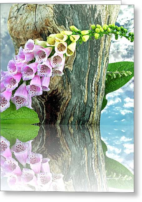 Thimbles-foxglove Greeting Card by Manfred Lutzius