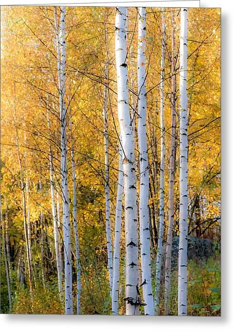 Thin Greeting Cards - Thin Birches Greeting Card by Ari Salmela