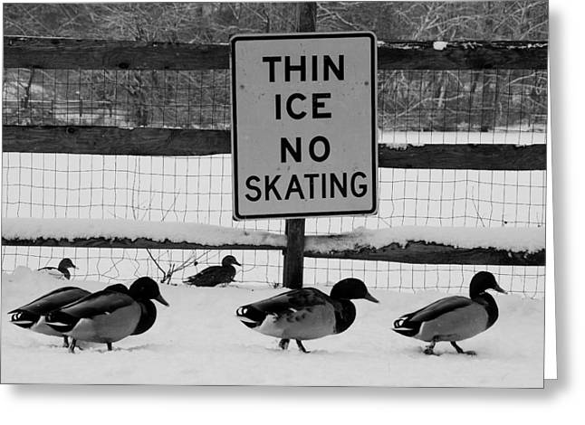 Haverford Greeting Cards - Thin Ice BW Greeting Card by Judy Gallagher