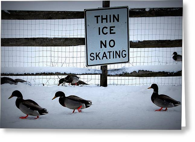 Haverford College Photographs Greeting Cards - Thin Ice  Greeting Card by Judy Gallagher