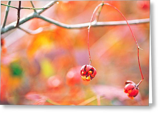 Red Leaves Greeting Cards - Thin Tree Branch With Bud Greeting Card by Panoramic Images