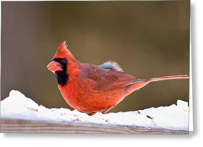 Cardinalis Greeting Cards - Things Are Looking Up Greeting Card by Jeff Sinon