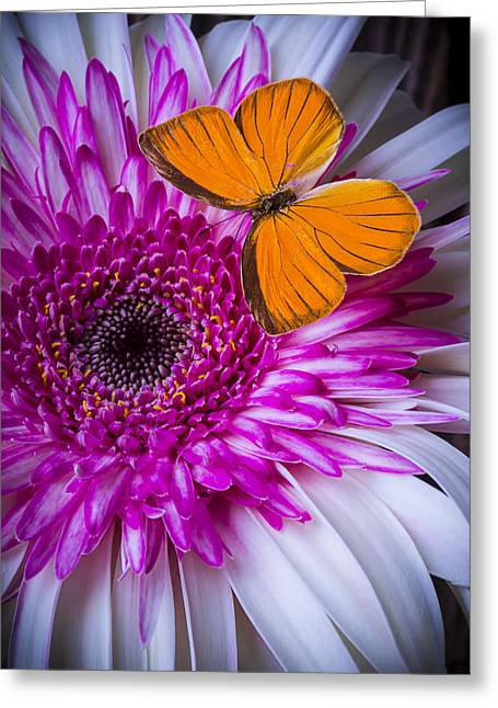 Pink Chrysanthemums Greeting Cards - Things Pink and Orange Greeting Card by Garry Gay