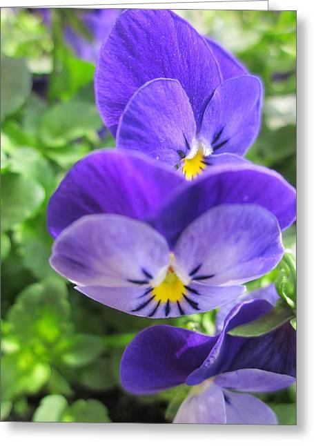 Springflowers Greeting Cards - Thinking of you Greeting Card by Rosita Larsson