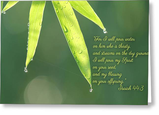 Isaiah Greeting Cards - Thirst Greeting Card by Beckie Fitgerald