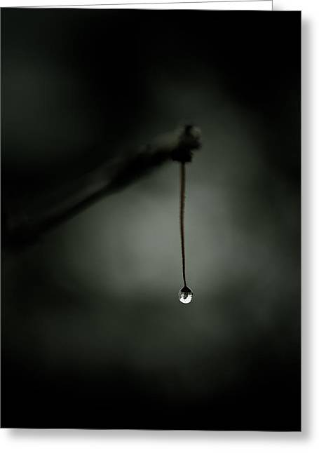 Water Droplets Greeting Cards - Thirst Greeting Card by Shane Holsclaw