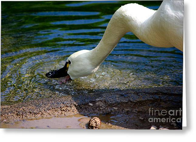 Rosamond Greeting Cards - Thirsty Bird Greeting Card by Patricia Trudell