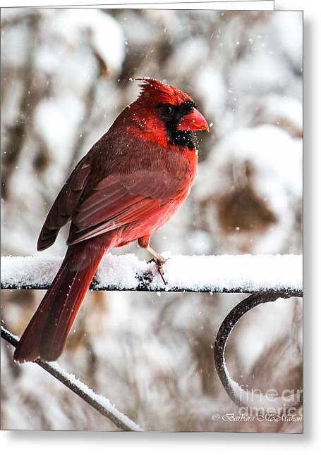 Male Cardinals In Snow Greeting Cards - This Better Be The Last Day Of Winter Greeting Card by Barbara McMahon