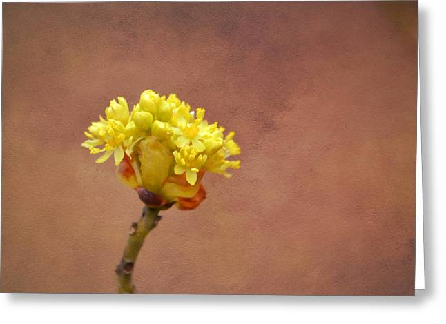 Renewing Greeting Cards - This Buds For You Greeting Card by Deena Stoddard