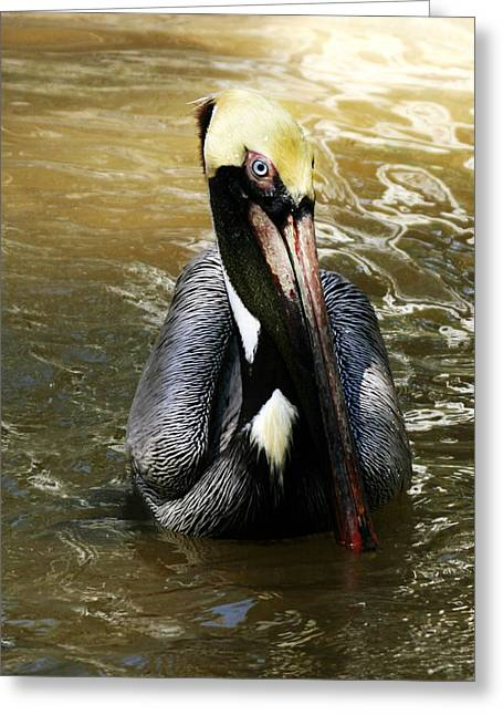 Water Fowl Greeting Cards - This is My Best Side Greeting Card by Regina  Williams