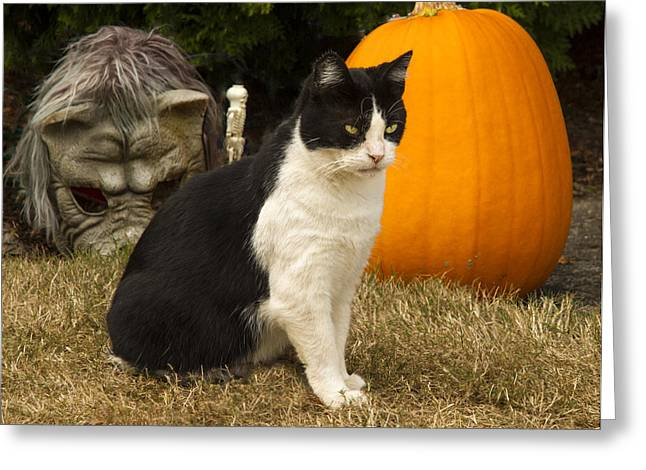 Housecats Greeting Cards - This is MY pumpkin Greeting Card by Jean Noren