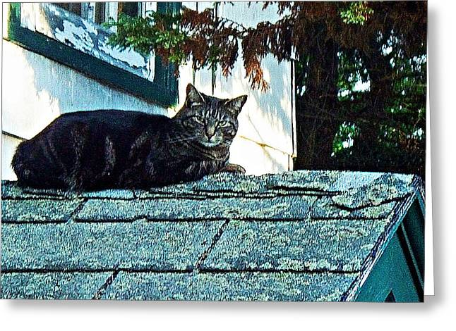 Olson House Greeting Cards - This is My roof Greeting Card by Joy Nichols