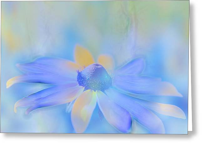 Softness Greeting Cards - This is Not Just Another Flower - s05a Greeting Card by Variance Collections