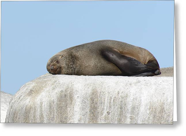 Sea Lions Greeting Cards - This is South Africa No.  3 - African Fur Seal Sleeping on a Whi Greeting Card by Paul W Sharpe Aka Wizard of Wonders