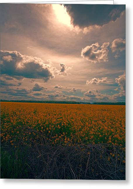 Sun Break Greeting Cards - This is the Day Greeting Card by Bonnie Bruno