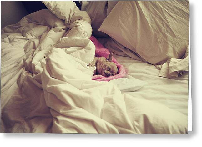 Sleeping Dogs Greeting Cards - This Is The Life Greeting Card by Laurie Search