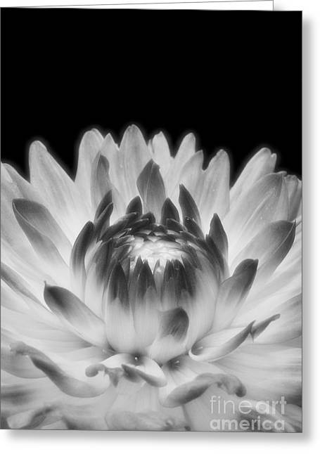Floral Digital Art Digital Art Greeting Cards - This Little Light Greeting Card by Susan Smith