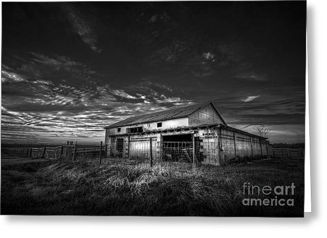 Farm Horse Greeting Cards - This Old Barn-b/w Greeting Card by Marvin Spates