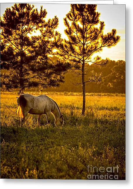 Gray Horse Greeting Cards - This Old Friend Greeting Card by Marvin Spates