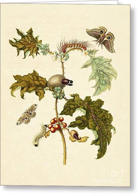 Artwork Of Butterfly Greeting Cards - Thistle And Moths Greeting Card by Getty Research Institute