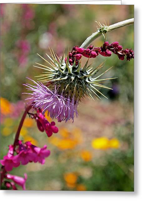 Thistle Greeting Cards - Thistle and Penstemon Greeting Card by Rona Black