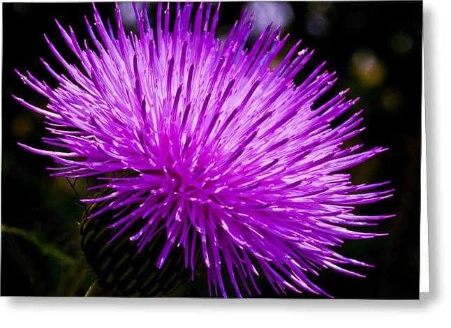 Wildfowers Greeting Cards - Thistle Greeting Card by Mark Alder