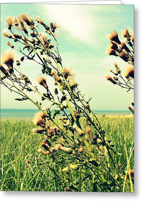 Sand Patterns Greeting Cards - Thistle on the Beach  Greeting Card by Michelle Calkins