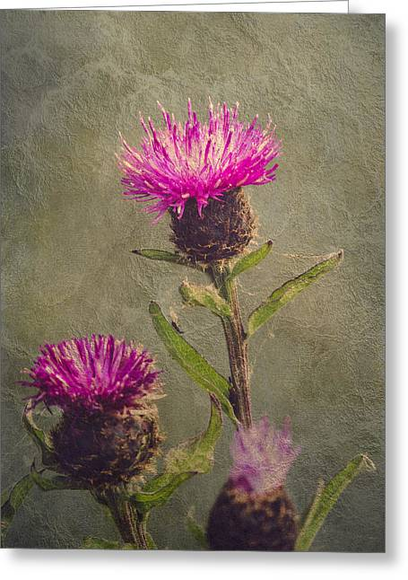 Interior Still Life Greeting Cards - Thistle Greeting Card by Wim Lanclus
