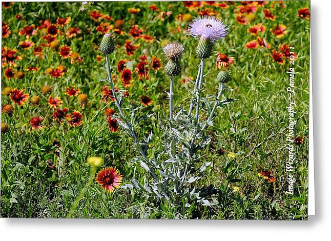 Thistle Bee Wildflowers Greeting Card by ARTography by Pamela Smale Williams