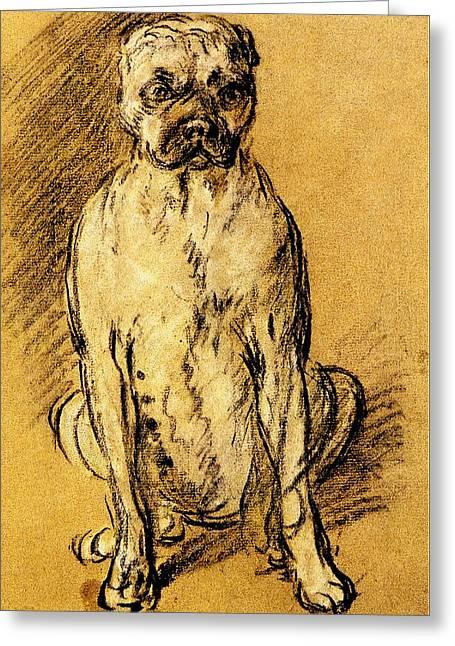 Boxer Drawings Greeting Cards - Thomas Gainsborough Bulldog Study Greeting Card by