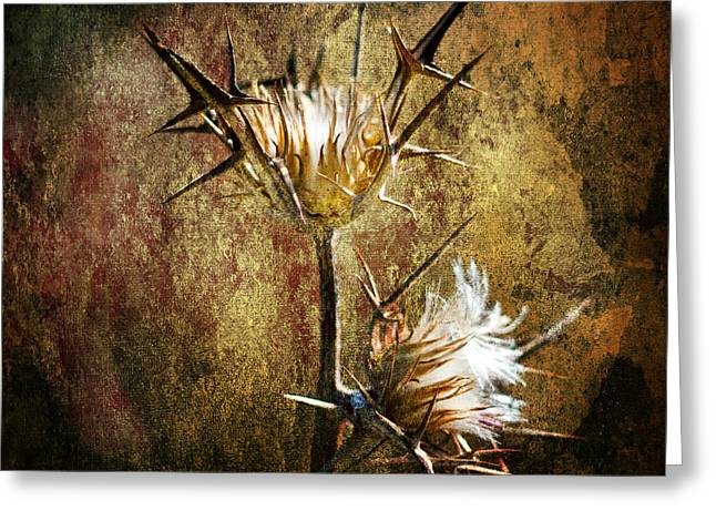 Easter Images Greeting Cards - Thorns Greeting Card by Stylianos Kleanthous